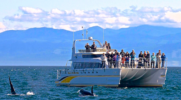 Whale Watching Victoria BC - Boats - 4 Ever Wild