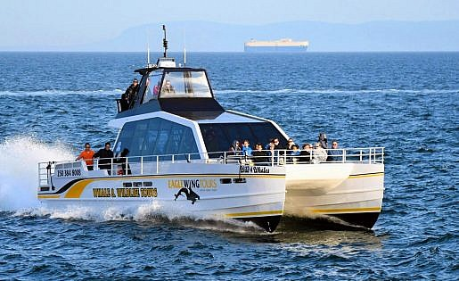 Whale Watching Victoria BC - Boats - Sarengeti